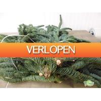 Warentuin.nl: OC ZA kerstgroen Nobilis XXL