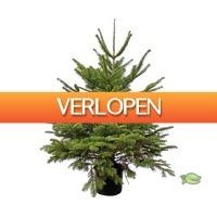 Warentuin.nl: Nordmann kerstboom gezaagd