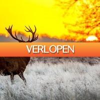 ZoWeg.nl: 5 dagen Veluwe 4*