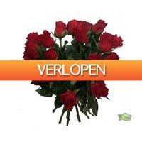 Warentuin.nl: Boek roze rozen