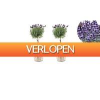 ActievandeDag.nl 1: Lavendelboompjes