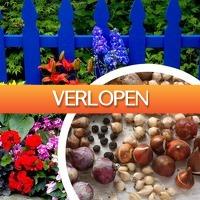 DealDigger.nl 2: Set van 100, 200 of 400 zomer bloembollen