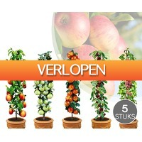 Voordeelvanger.nl 2: Set van 5 of 10 fruitbomen