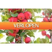 Marktplaats Aanbieding: Set van 2 Appletini appelbomen