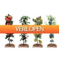 CheckDieDeal.nl: Set van 4 winterharde fruitbomen