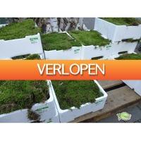 Warentuin.nl: Vers platmos - 4 lagen