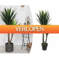 Groupdeal 2: XXL kunstplant Yucca