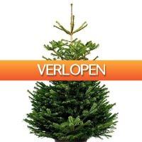 Bol.com: Korting op kerstbomen en -versiering