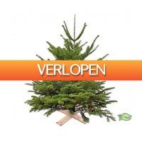 Warentuin.nl: Echte kerstboom gezaagd 125-15 cm