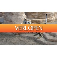 ActieVandeDag.nl 2: Unieke tijgerworkshop