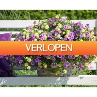 1Dayfly Extreme: een tuin vol bloeiende planten