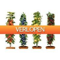 Koopjedeal.nl 1: Set van 4 Winterharde Fruitbomen (Appel, Peer, Kers en Pruim)