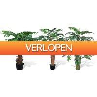 Groupon 2: Kunst palmbomen