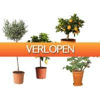 GroupActie.nl: 4 of 8 mediterrane planten