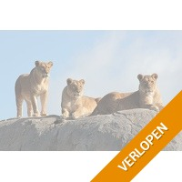 Veiling: Tickets voor WILDLANDS in Emmen (2 p.)