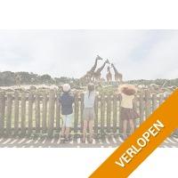 Veiling: Op safari in Beekse Bergen (2 personen)
