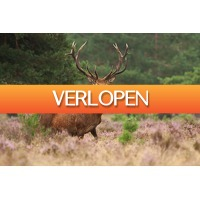 Cheap.nl: 3 dagen op de Veluwe