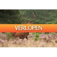 Hoteldeal.nl 1: 3 dagen midden op de Veluwe