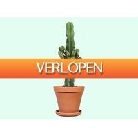 Tripper Producten: Euphorbia Cactus