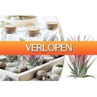 VoucherVandaag.nl 2: Tillandsia luchtplanten