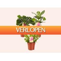 Tripper Producten: Luchtzuiverende plantenmix