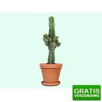 Bekijk de deal van Tripper Producten: Euphorbia Cactus