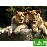 Bekijk de deal van Tripper Tickets: Entreeticket voor Dierenpark Parijs