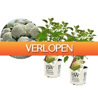 iBOOD Home & Living: 2 x Perfect Plant Hortensia Strong Annabelle