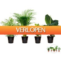 iBOOD Home & Living: Perfect Plant kamerplantenset