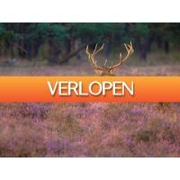 ZoWeg.nl: 5 dagen Veluwe