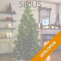 Anni kerstboom met lichtjes