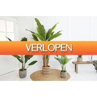 HomeHaves.com: Kunstplant Palm