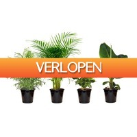 Groupon 1: Set van 4 kamerplanten