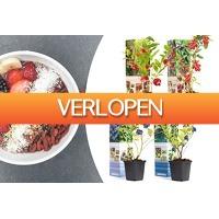 VoucherVandaag.nl: Superfoods fruitplanten