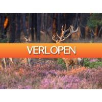 ZoWeg.nl: 4 dagen Betuwe