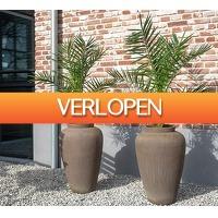 Koopjedeal.nl 3: Canarische dadelpalm
