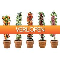 Voordeelvanger.nl 2: Set Van 5 Of 10 Fruitbomen - Appel, Peer, Kers, Pruim En Perzik