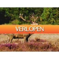 ZoWeg.nl: 4 dagen Veluwe