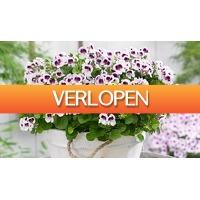 ActievandeDag.nl 1: Set van 6 anti-muggen geraniums