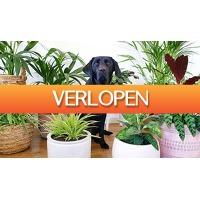 ActieVandeDag.nl 2: Mix van 4 diervriendelijke kamerplanten