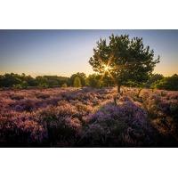 Bekijk de deal van Traveldeal.nl: 2 of 3 dagen 4*-hotel op de Veluwe