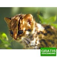 Bekijk de deal van Tripper Tickets: Entreeticket Taman Indonesia