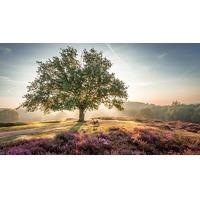 Bekijk de deal van Traveldeal.nl: 4 dagen 4*-Van der Valk Hotel bij Nijmegen