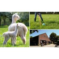 Bekijk de deal van SocialDeal.nl: Alpaca-golf + meet & feed + drankje