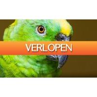 Groupon 3: Entree voor Papegaaienpark - ZOO Veldhoven
