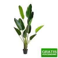 Bekijk de deal van Xenos.nl: Strelitzia kunstplant - 150 cm