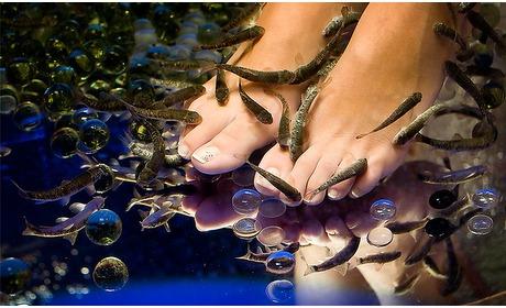 Social Deal: Fish spa voor handen of voeten + drankje