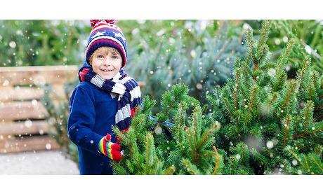 Wowdeal: Prachtige kerstboom vers van het land