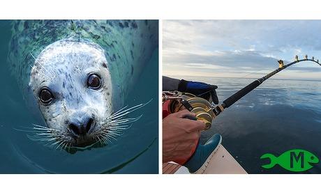 Wowdeal: Zeehondensafari of bootvissen op de Oosterschelde
