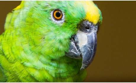Groupon: Papegaaienpark - Zoo Veldhoven